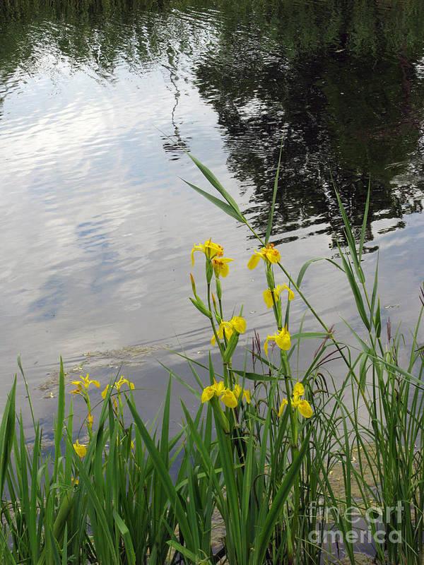 Wild Poster featuring the photograph Wild Iris By The Pond by Ausra Huntington nee Paulauskaite