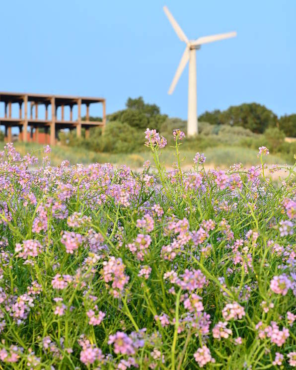 Wind Poster featuring the photograph Wind Turbine And Flowers by Gynt