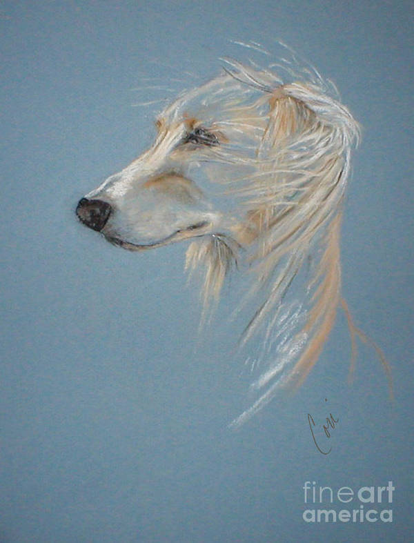 Saluki Poster featuring the drawing Windhound by Cori Solomon