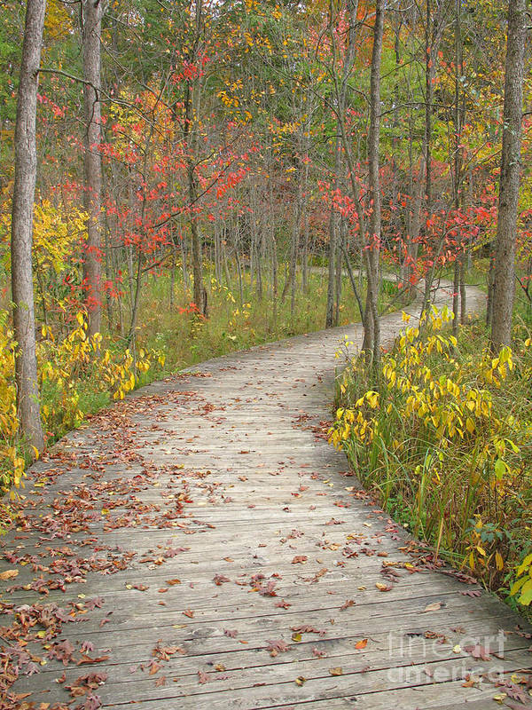 Autumn Poster featuring the photograph Winding Woods Walk by Ann Horn