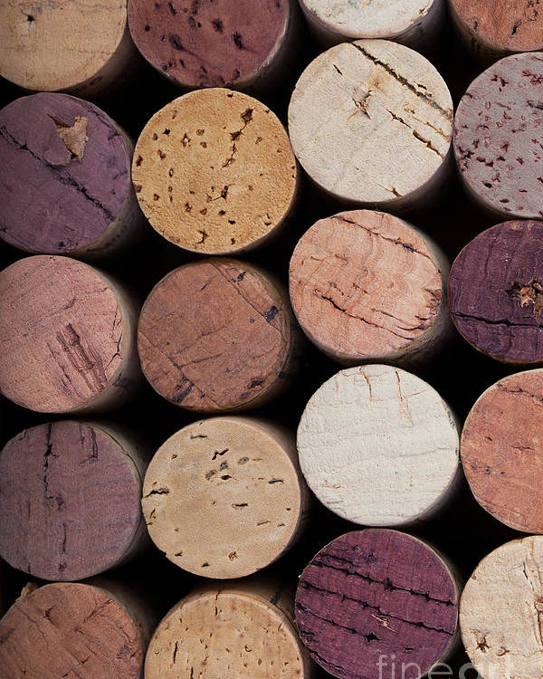 Alcohol Poster featuring the photograph Wine Corks 1 by Jane Rix