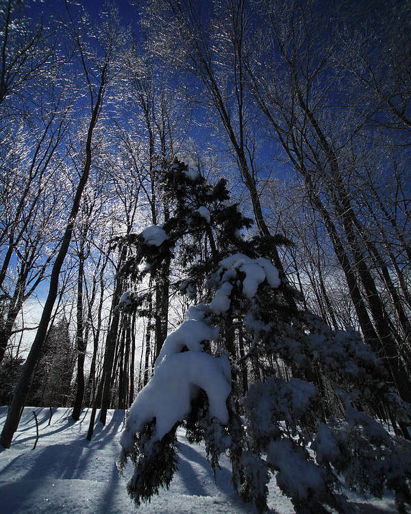 Winter Poster featuring the photograph Winter Blue by Karol Livote