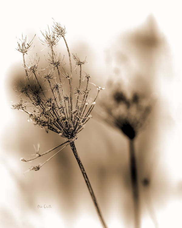 Flowers Poster featuring the photograph Winter Flowers II by Bob Orsillo