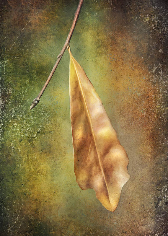 Leaf Poster featuring the photograph Winter Is Coming by Brenda Bryant