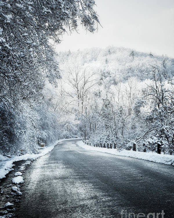 Winter Poster featuring the photograph Winter Road In Forest by Elena Elisseeva