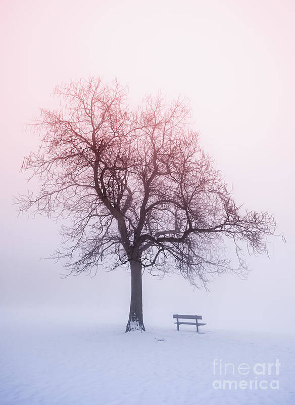 Trees Poster featuring the photograph Winter Tree In Fog At Sunrise by Elena Elisseeva