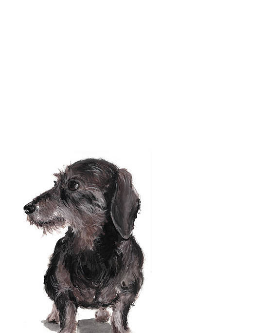 Wirehaired Dachshund Poster featuring the painting Wirehaired Dachshund - Rauhaardackel by Barbara Marcus