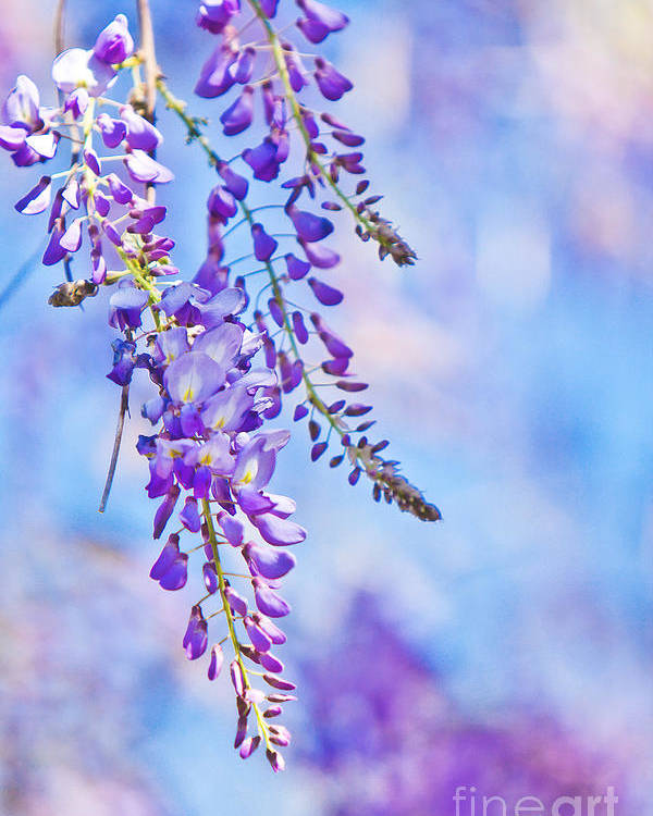 Flower Poster featuring the photograph Wisteria by Joan McCool
