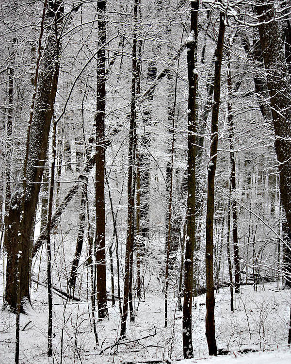 Woods On A Snowy Night Poster featuring the photograph Woods On A Snowy Night by Penny Hunt
