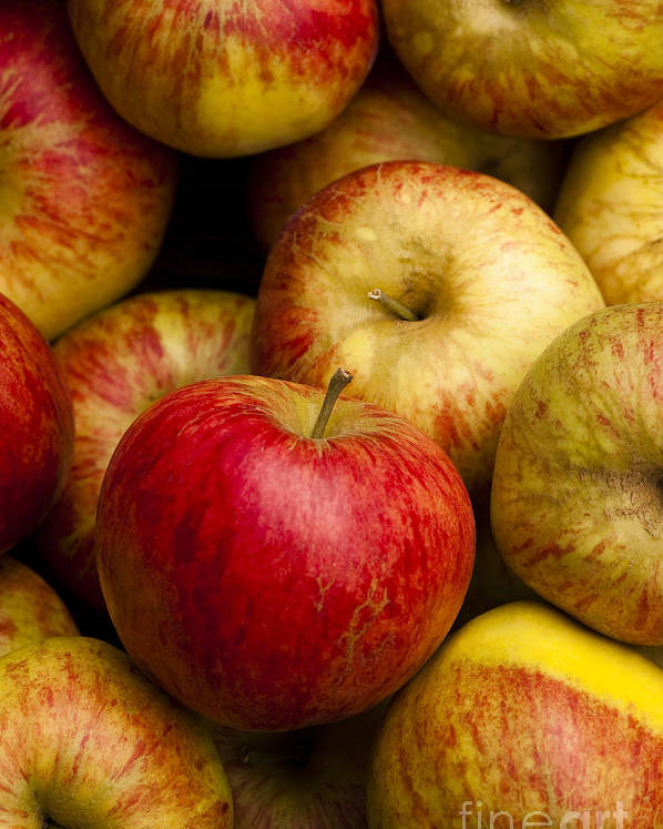 Apple Poster featuring the photograph Worcester Pearmain by Anne Gilbert