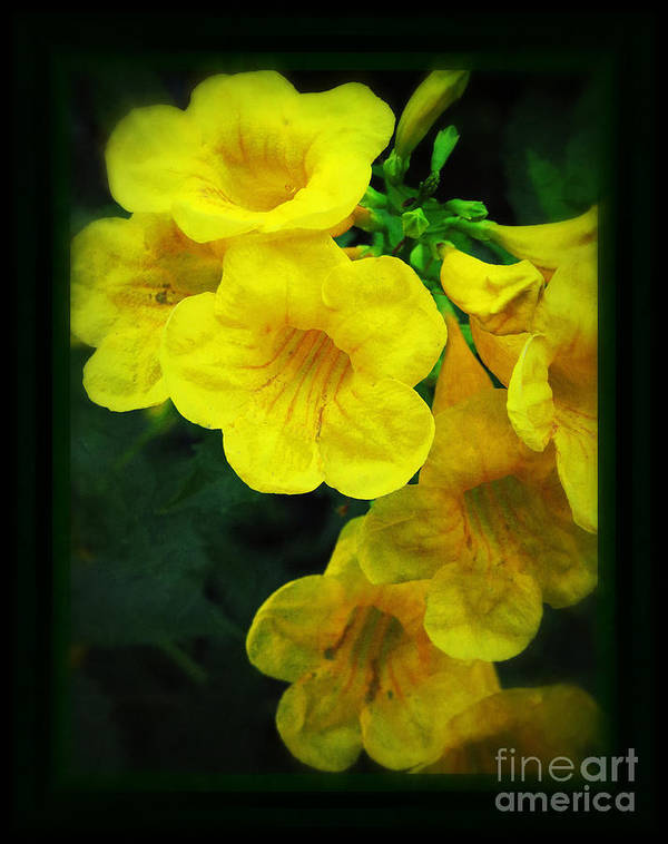 Yellow Poster featuring the photograph Yellow - Amarillo - Jaune by Ella Kaye Dickey