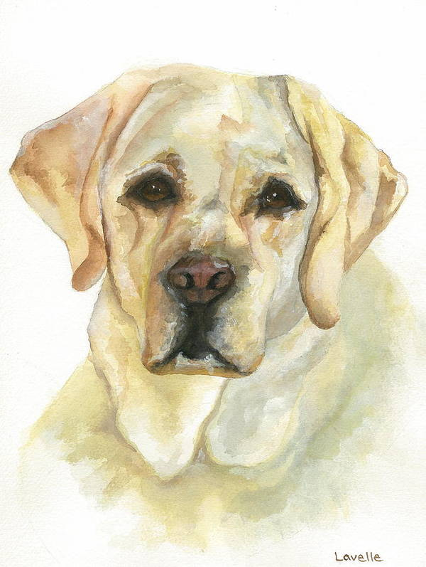 Dog Pictures Poster featuring the painting Yellow Lab by Kimberly Lavelle