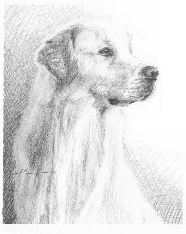 <a Href=http://miketheuer.com Target =_blank>www.miketheuer.com</a> Yellow Labrador Show Dog Pencil Portrait Poster featuring the drawing Yellow Labrador Show Dog Pencil Portrait by Mike Theuer