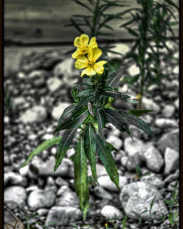 Flower Poster featuring the photograph Yellow by Michaela Preston