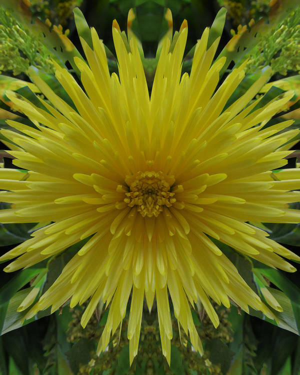 Flowers Poster featuring the photograph Yellow Spider Mum by Michele Caporaso