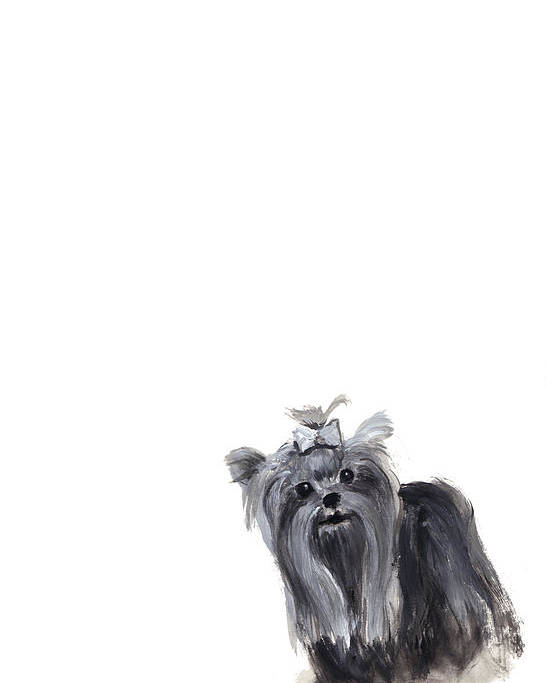 Yorkshire Terrier Poster featuring the painting Yorkshire Terrier by Barbara Marcus