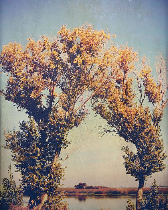 Trees Poster featuring the photograph You Were Meant For Me by Laurie Search
