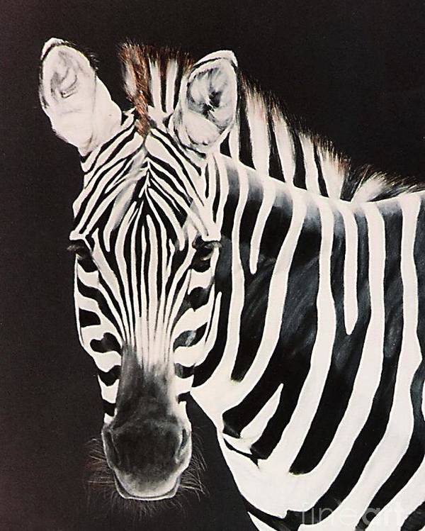 black And White Poster featuring the painting Zebra facing left by DiDi Higginbotham