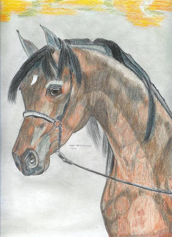 Arabian Horse Poster featuring the drawing Arabian Horse by Don Gallacher