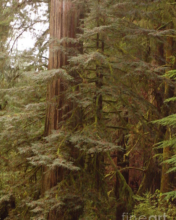 Trees Poster featuring the photograph Ashland Oregon by Rose Jones