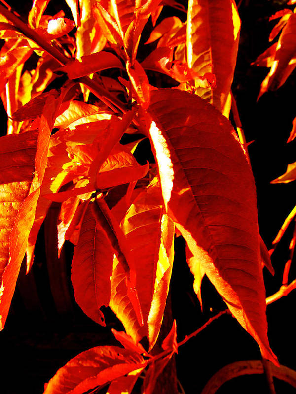 Leaves Poster featuring the digital art Autumn Leaves by Louise Grant