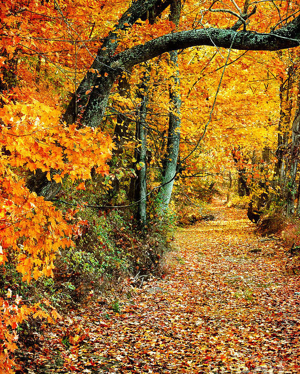 Autumn Poster featuring the photograph Autumn Pathway by Cheryl Davis