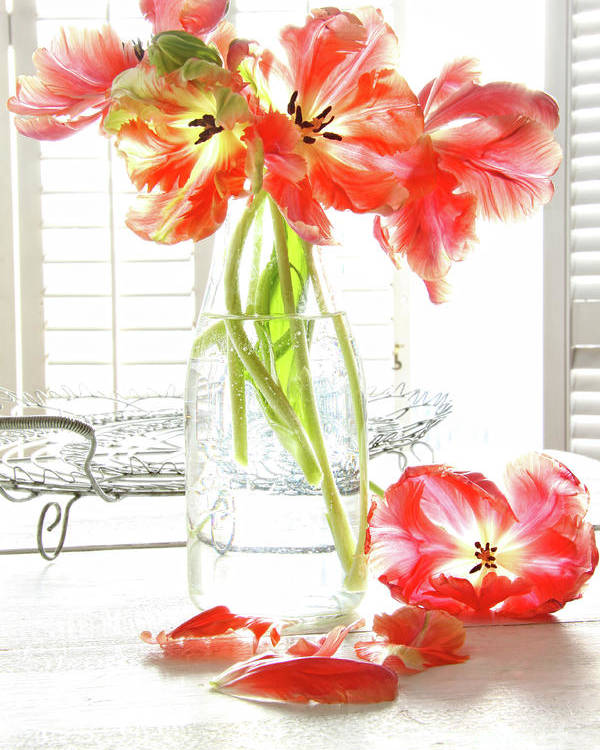 Background Poster featuring the photograph Beautiful Tulips In Old Milk Bottle by Sandra Cunningham