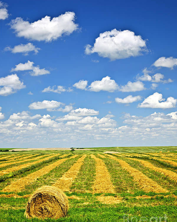 Agriculture Poster featuring the photograph Farm Field At Harvest In Saskatchewan by Elena Elisseeva