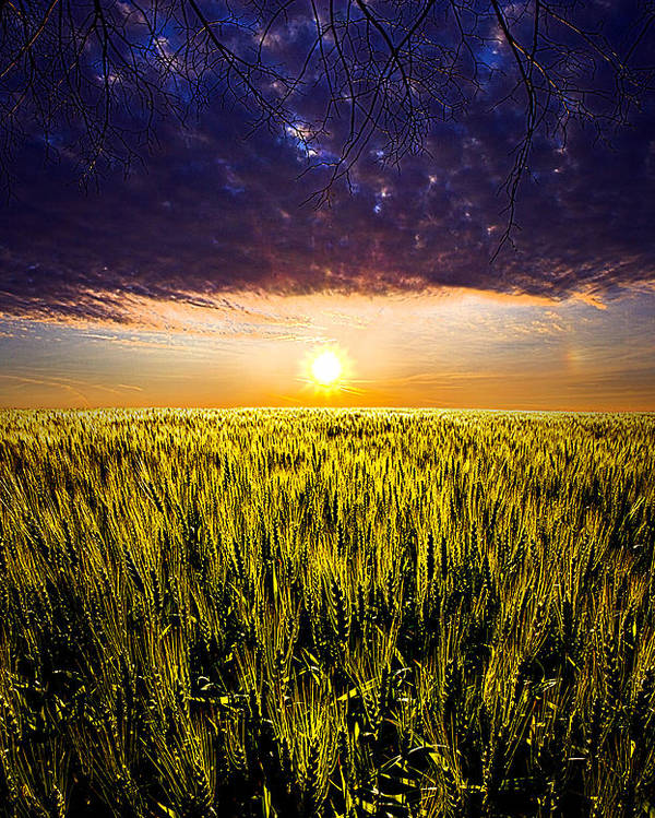 Horizons Poster featuring the photograph Light Bright by Phil Koch