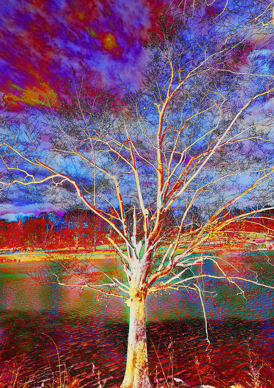 Tree Poster featuring the photograph Magical Tree 3 by Sheila Kay McIntyre