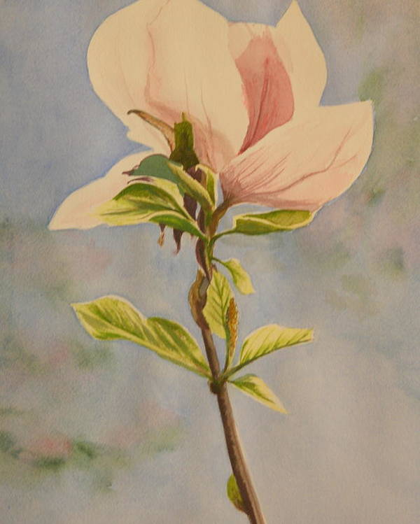 Magnolia Flower Poster featuring the painting Magnolia Blossom by Betty-Anne McDonald