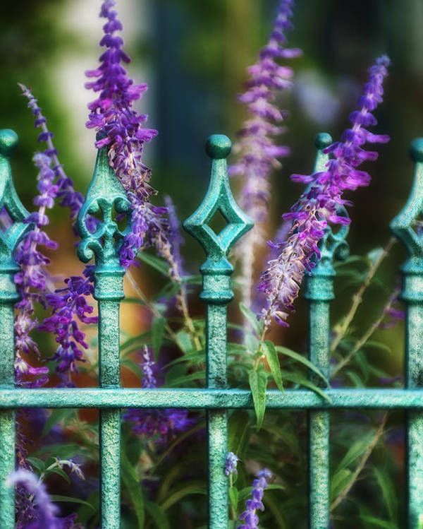 Lavender Poster featuring the photograph Secret Garden by Brenda Bryant