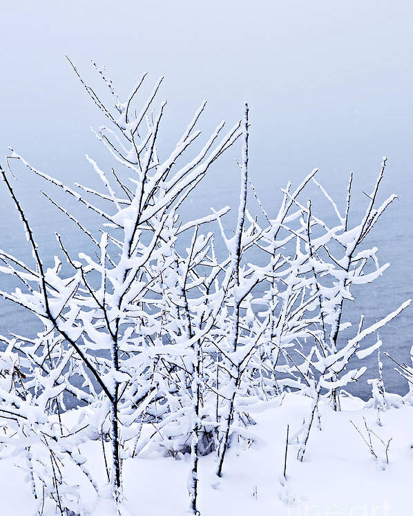 Winter Poster featuring the photograph Snowy Trees by Elena Elisseeva
