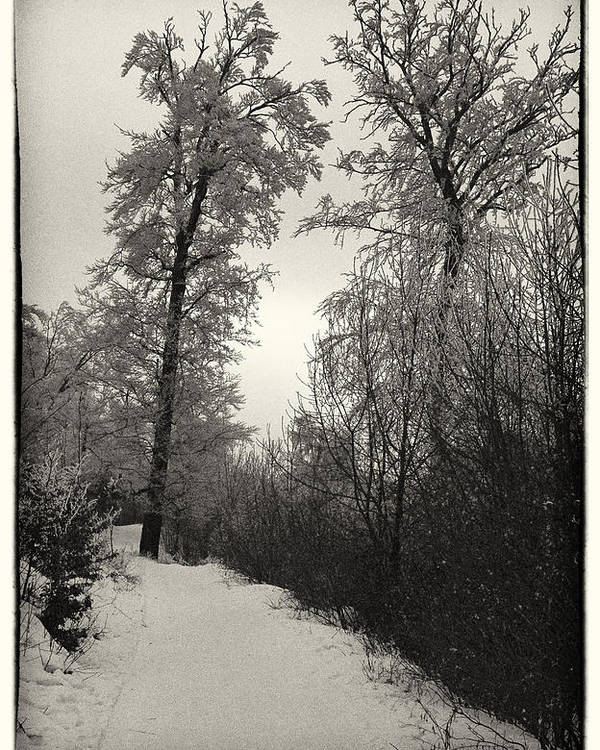 Winter Poster featuring the photograph Winter Mood by Tibor Puski