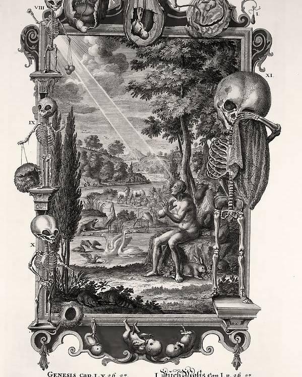 Bible Poster featuring the photograph 1731 Johann Scheuchzer Creation Of Man by Paul D Stewart