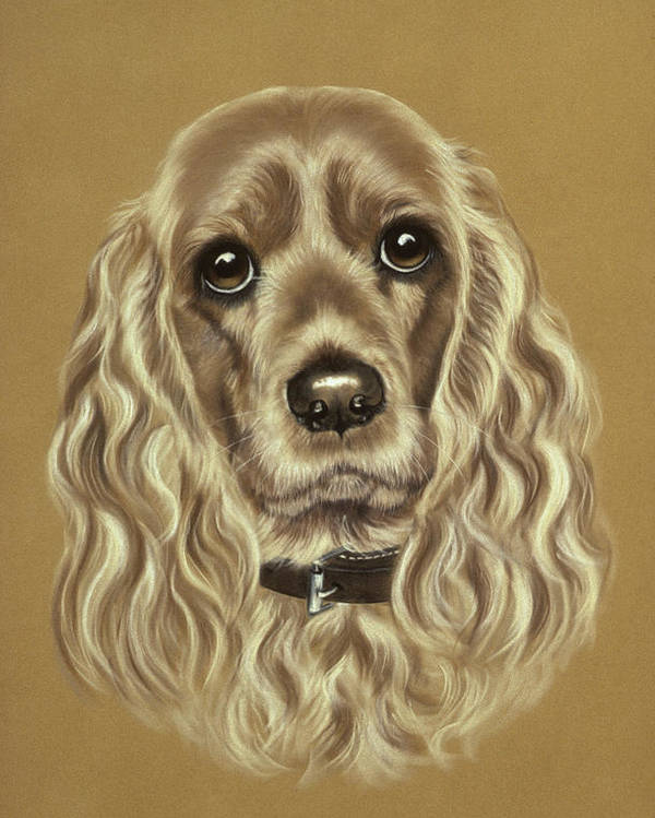 Dog Poster featuring the pastel Cocker Spaniel by Patricia Ivy