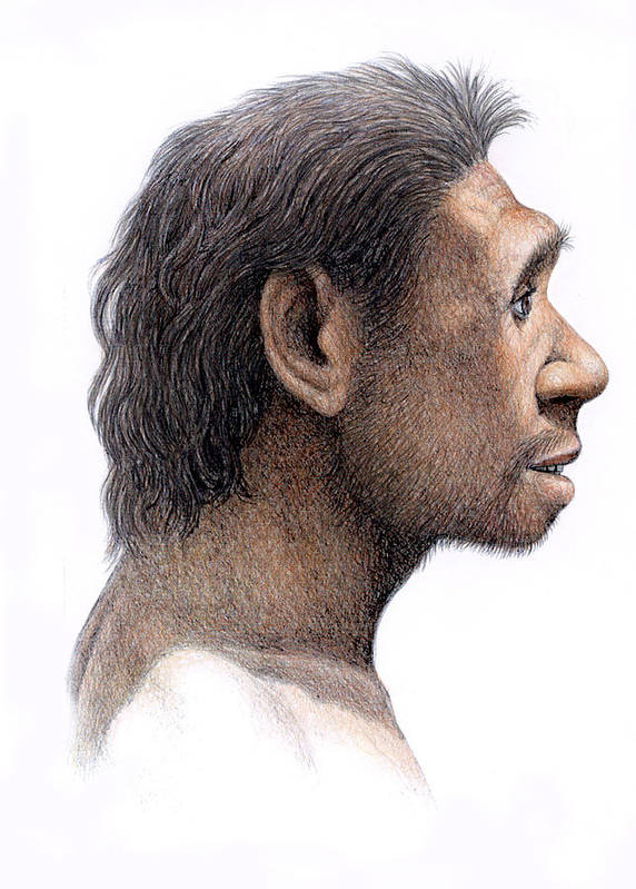 Homo Antecessor Poster By Mauricio Anton
