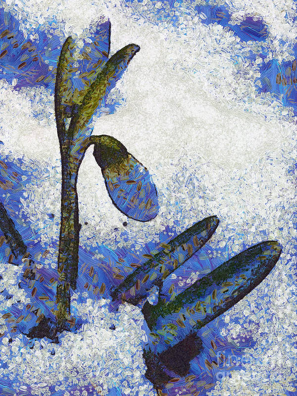 Snowdrop Poster featuring the painting Snowdrop by Odon Czintos