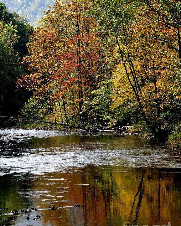 Williams River Poster featuring the photograph Williams River Autumn by Thomas R Fletcher