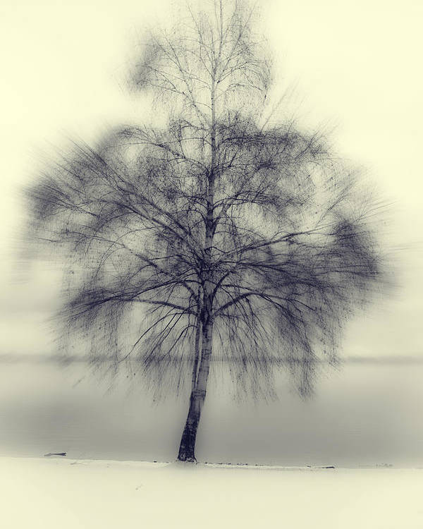 Tree Poster featuring the photograph Winter Tree by Joana Kruse