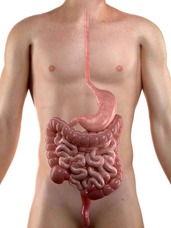 Artwork Poster featuring the photograph Healthy Digestive System, Artwork by Sciepro