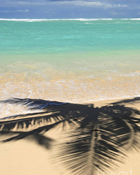 Beach Poster featuring the photograph Tropical Beach by Elena Elisseeva