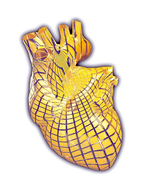Heart Poster featuring the photograph Human Heart, Artwork by Laguna Design