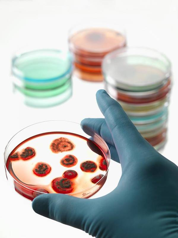 Biological Poster featuring the photograph Microbiology Research by Tek Image