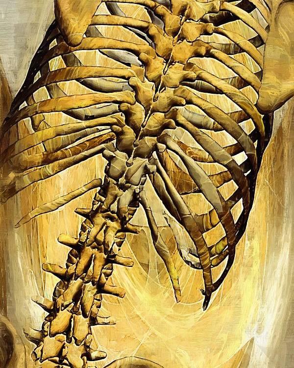 Skeleton Poster featuring the digital art Torso Skeleton by Joseph Ventura
