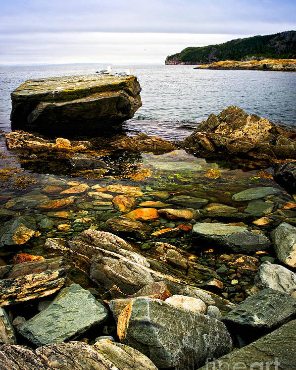 Coast Poster featuring the photograph Atlantic Coast In Newfoundland by Elena Elisseeva