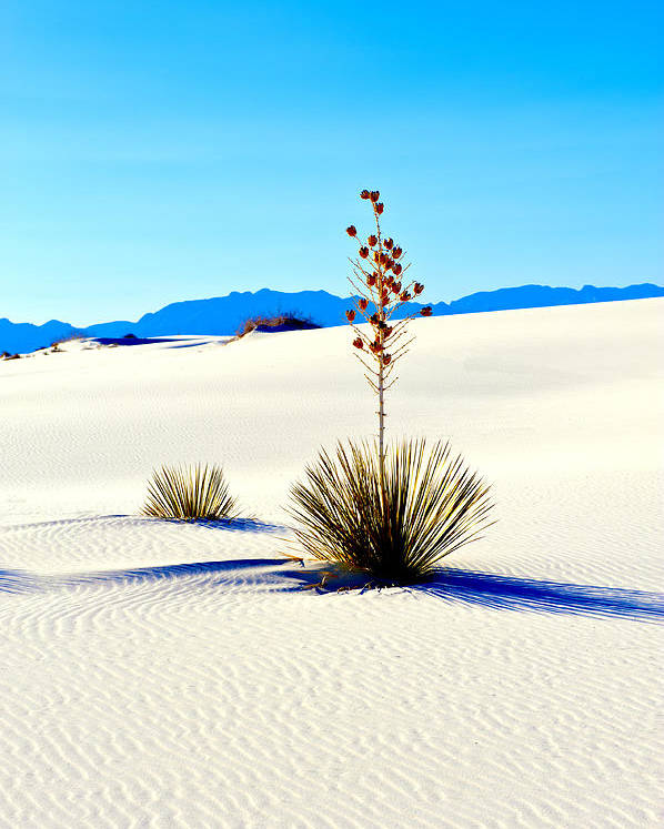Landscape Poster featuring the photograph White Sands by Larry Gohl