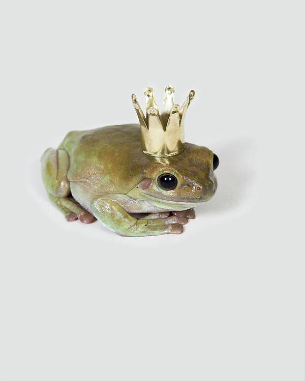 Vertical Poster featuring the photograph A Frog Wearing A Crown, Studio Shot by Paul Hudson