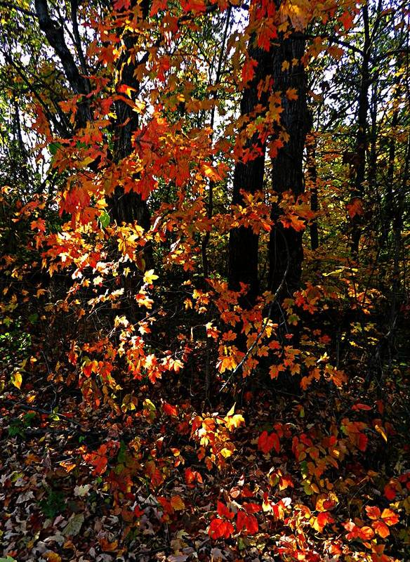 Autumn Scenes Poster featuring the photograph A Slash Of Sunlight by Julie Dant
