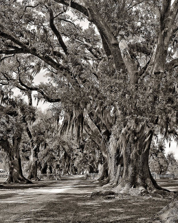 Evergreen Plantation Poster featuring the photograph A Stroll Through Time Monochrome by Steve Harrington